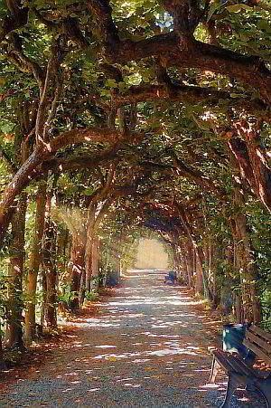 Magie der Bäume und Pflanzen
