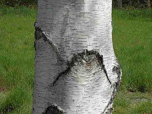 Bäume gibt es nicht genug