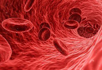 Blut Zellen Anatomie