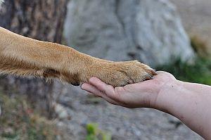 Freundschaft zwischen Mensch und Hund