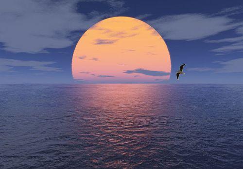 Horizont: Sonne Meer und Möwe