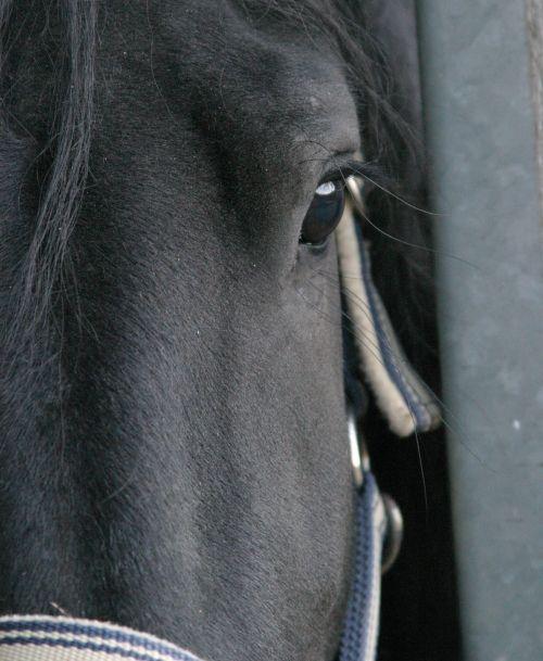 Teamtraining mit Pferden