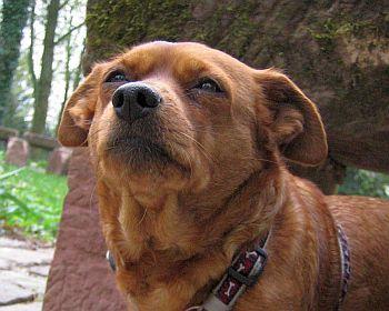 Hund ohne Leine
