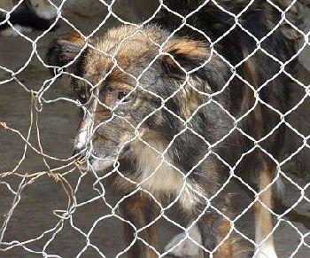 Hundehilfe Bulgarien