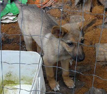 Hundehilfe Tierschutz