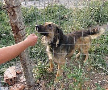 Hundehilfe Osteuropa