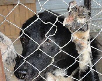 Hundehilfe