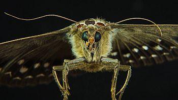 Insektenfallen