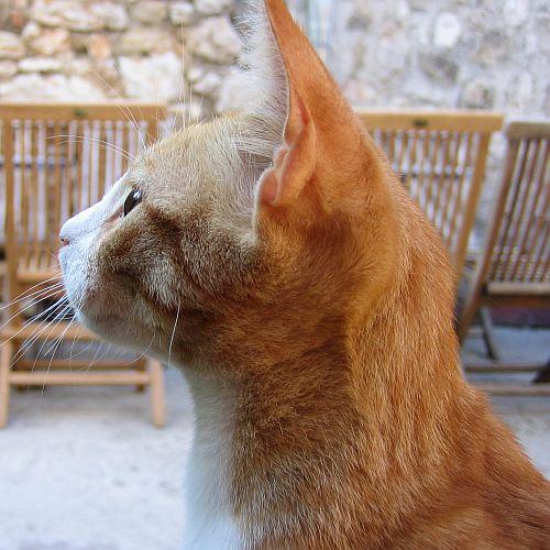 Die Katze: Gottheit und Dämon