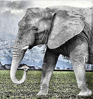 bedeutung der krafttiere der elefant. Black Bedroom Furniture Sets. Home Design Ideas