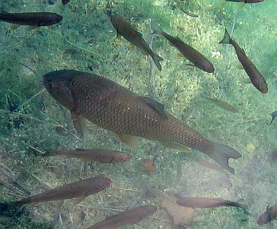 Tradition: Und am Freitag dann Fisch