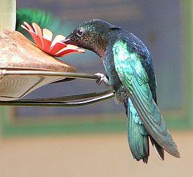 Krafttier Kolibri Bedeutung