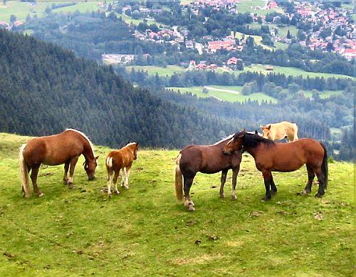 Krafttier Pferde