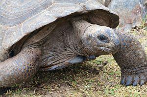 Die spirituelle Bedeutung der Schildkröte