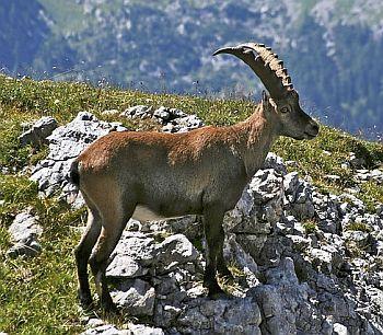 Krafttiere und deren bedeutung beitragsserie - Eigenschaften der fabeltiere ...
