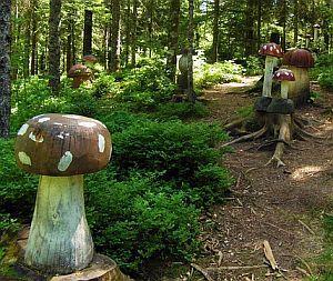 Märchenwald mit Pilzen