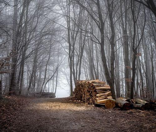 Malcolm: Junge auf dem Waldweg