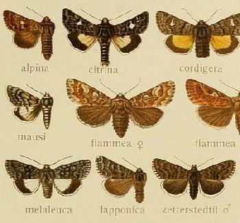 Insektensprays