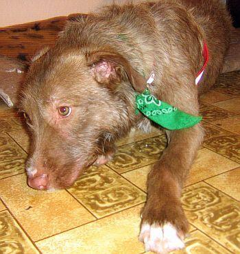 Verhaltensforschung bei Hunden