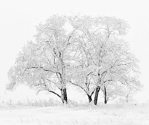 Der Elfenbaum im Winter