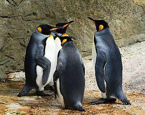 Pinguine in Neuseeland