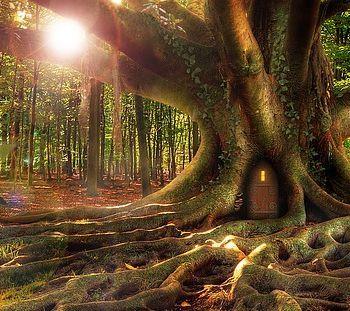 Zwei im großen Wald