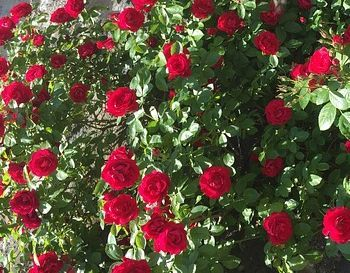 Zweibrücker Rosentreppe