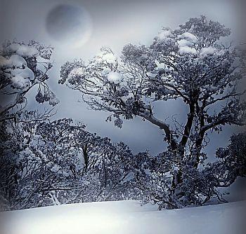 Schneesaat