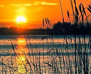 Schilf und Sonnenuntergang