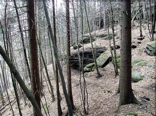 Schlafender Wald