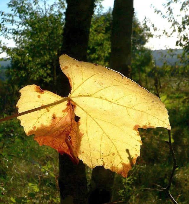 Wald von Pousthomy