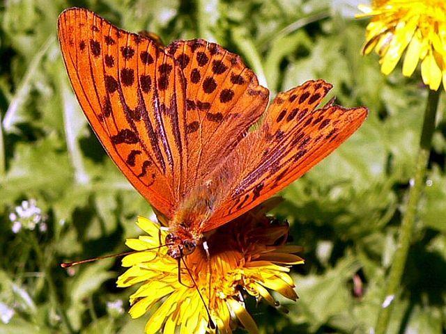 Krafttier Schmetterling: Symbol der Befreiung