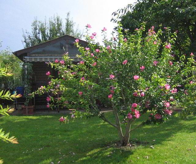 Zauberhafter Garten