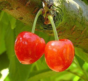 Zwei rote Kirschen