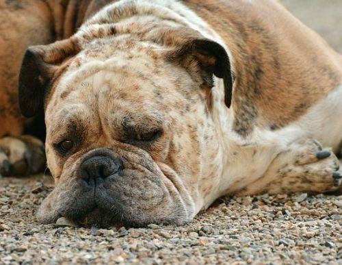 Boreout: Krank werden durch Nichtstun?