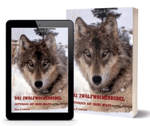 Gatterjagd auf graue Wölfe