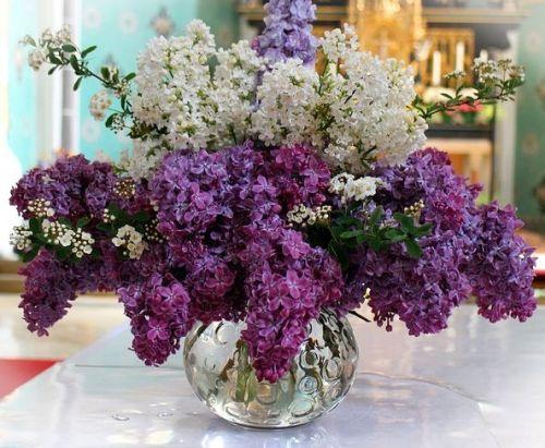 Fliederstrauß in weiß und lila