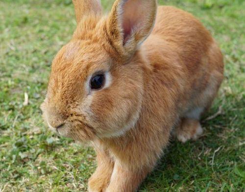 Hasenliebe: Erlebnisse mit Bobbele, Flöckle und Schnuffele